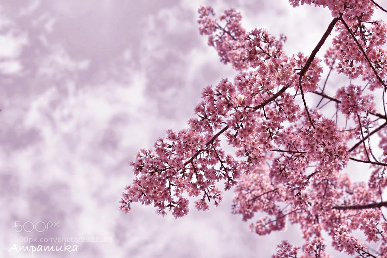 Photograph Sweet Dream by Suradej Chuephanich on 500px