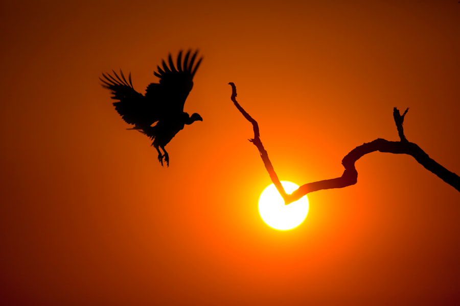 Photograph Landing at Sunset by Mario Moreno on 500px