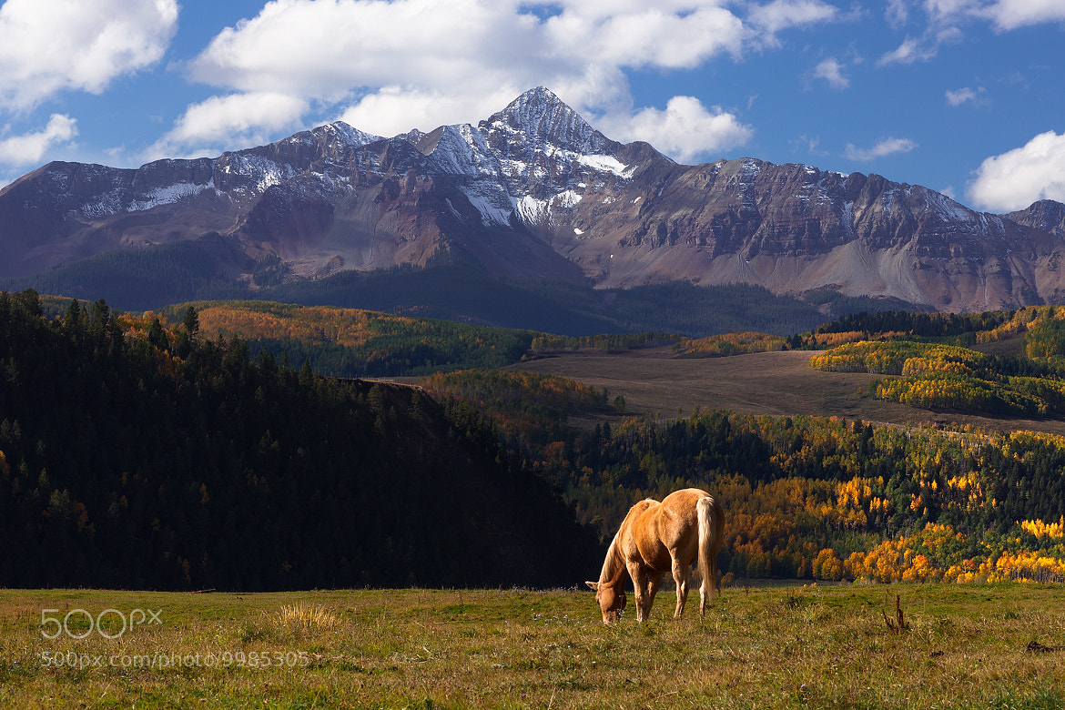 Photograph Horses Enjoy Mountains by Paul James on 500px