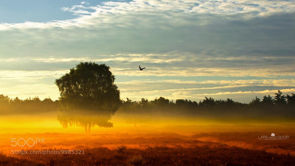 Photograph morning mist by Lars van de Goor on 500px