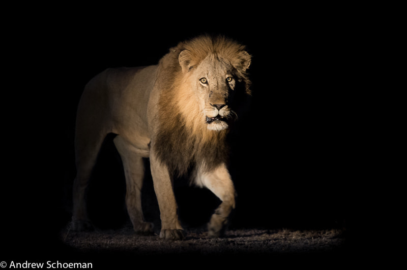 Photograph Night Walker! by Andrew Schoeman on 500px
