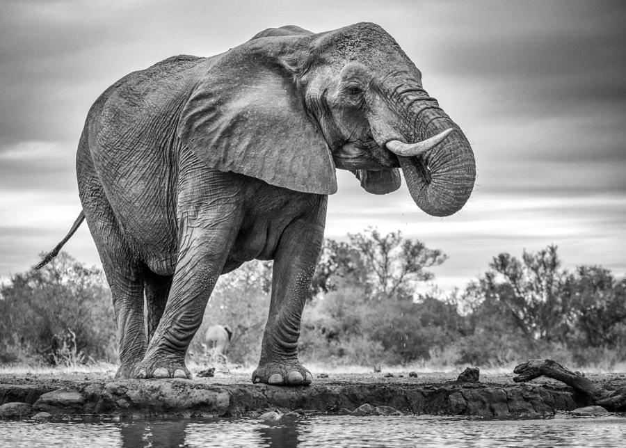 Photograph Ellie drinking by Jaco Marx on 500px