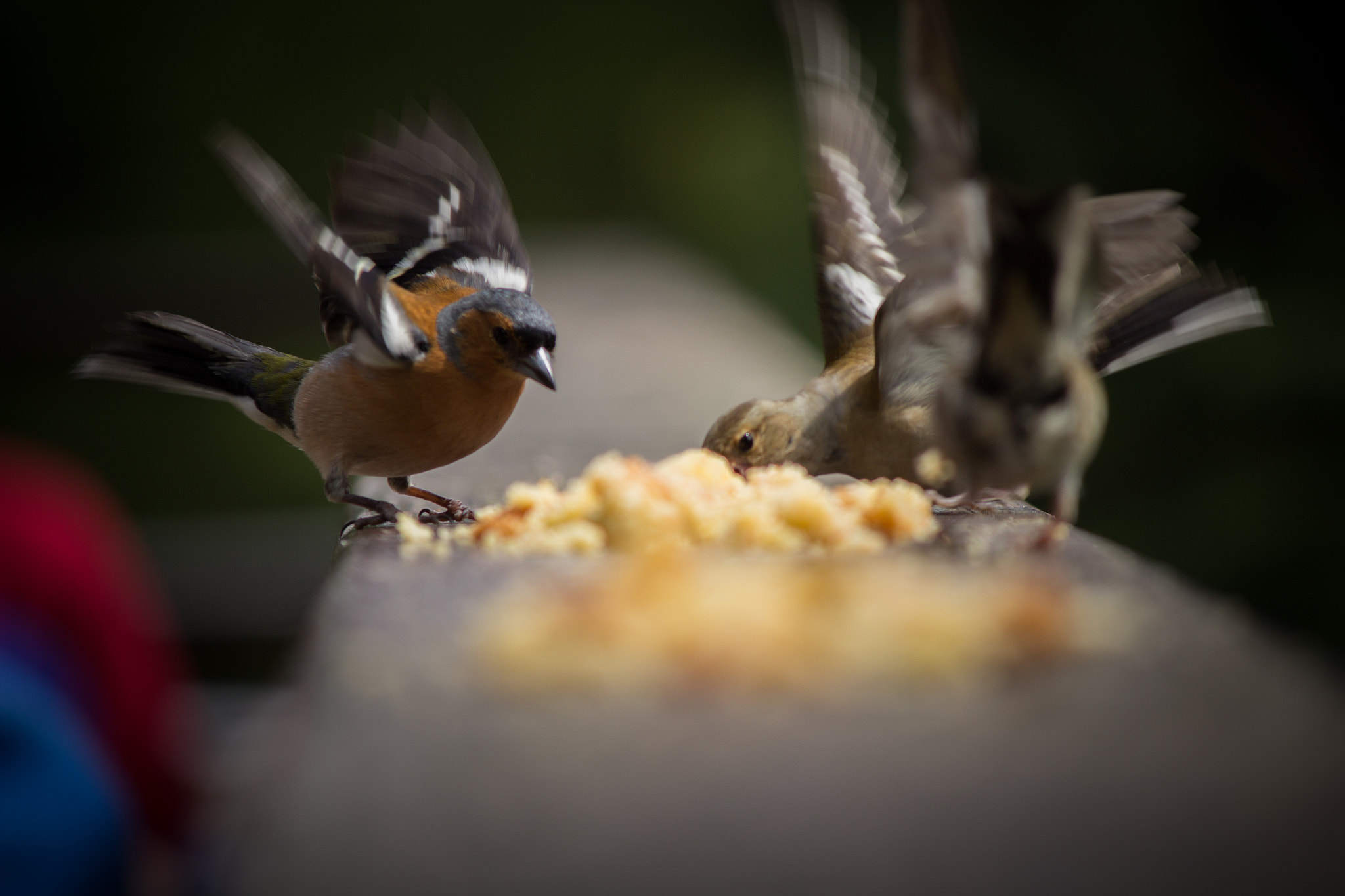 Photograph Birds feeding by Dan Mulley on 500px