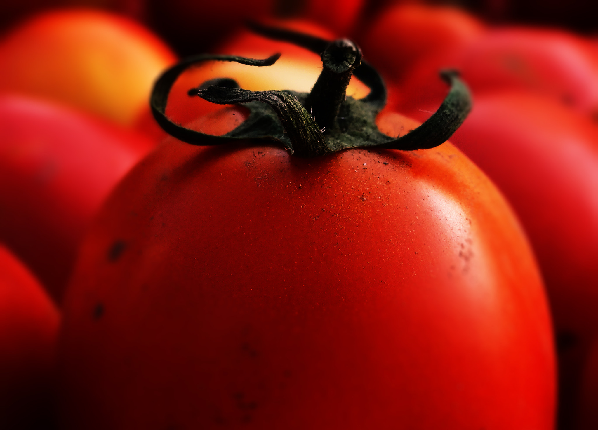 Photograph Tomatoes by Akshun Babbar on 500px