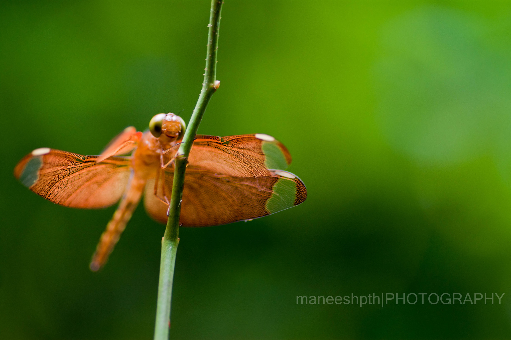 Photograph dragonfly..... by maneesh p on 500px