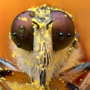 bug eye :)